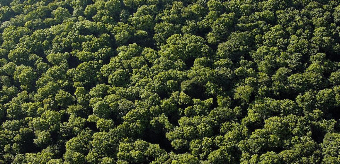 Environnement : Plus d'arbres possible pour sauver la planète