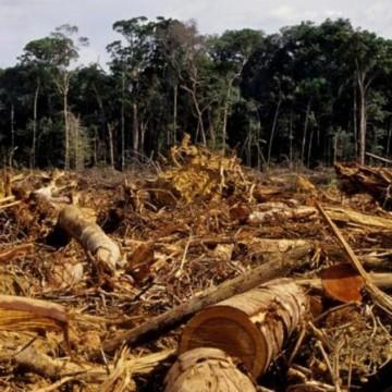 Le Mayombe au Kongo-Central menacé de déforestation
