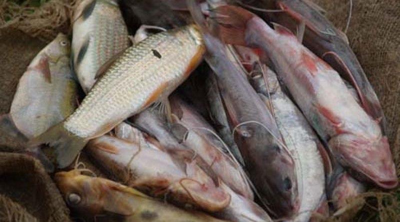 Lubero : Les pêcheurs de Kamandi-Lac suspendent la pêche sur le lac Edouard
