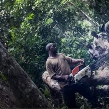 Haut Uélé : Le Soudan occupe 32 km2 des forêts congolaises pour exploitation des bois