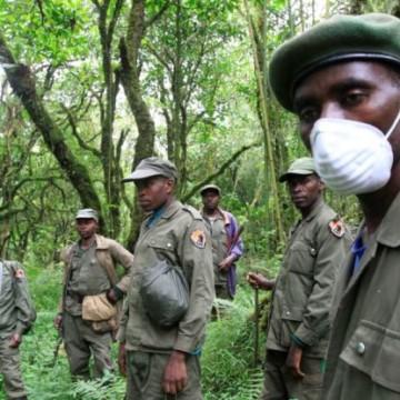 Nord-Kivu : Mésentente entre écogardes de l'ICCN et population de Kasindi-Lubiriha