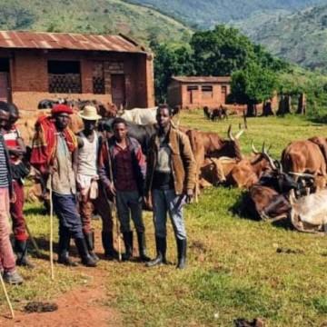 5 morts et plusieurs vaches emportées lors des affrontements entre les FARDC et la milice CODECO à Irumu
