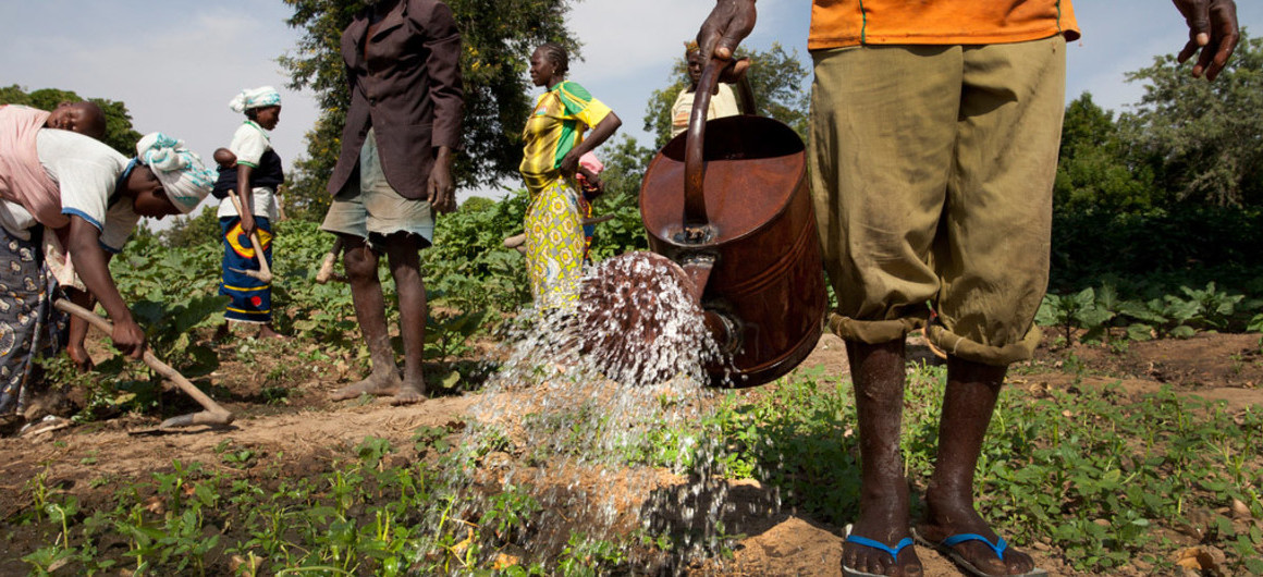 La FAO a besoin de 155 millions USD pour 21,8 millions de personnes en insécurité alimentaire en RDC