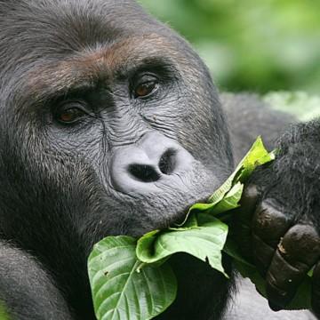 RDC : 4 parcs nationaux célèbrent leur 50e anniversaire