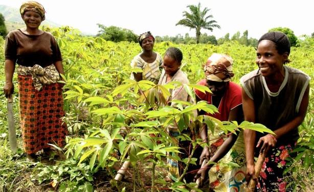 Kananga : KDPP s'investit dans la production des cultures vivrières