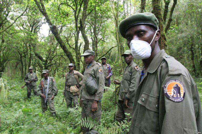 Nord-Kivu : un chef rebelle arrêté à Butembo par les éco-gardes