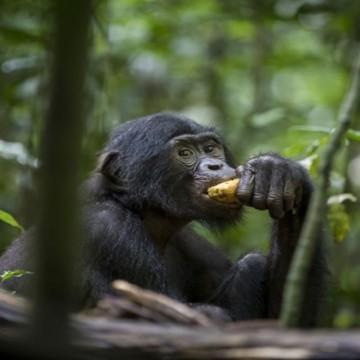 le Parc national de la Salonga retiré de la liste du patrimoine mondial en péril