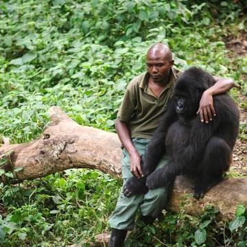 Gorille Ndakasi